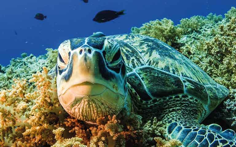 gili island turtle