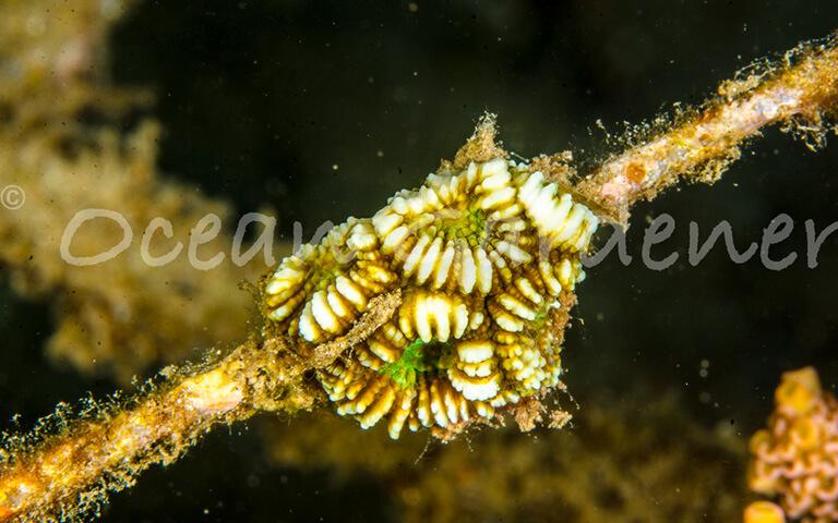 Micro Fragmentation - Ocean Gardener