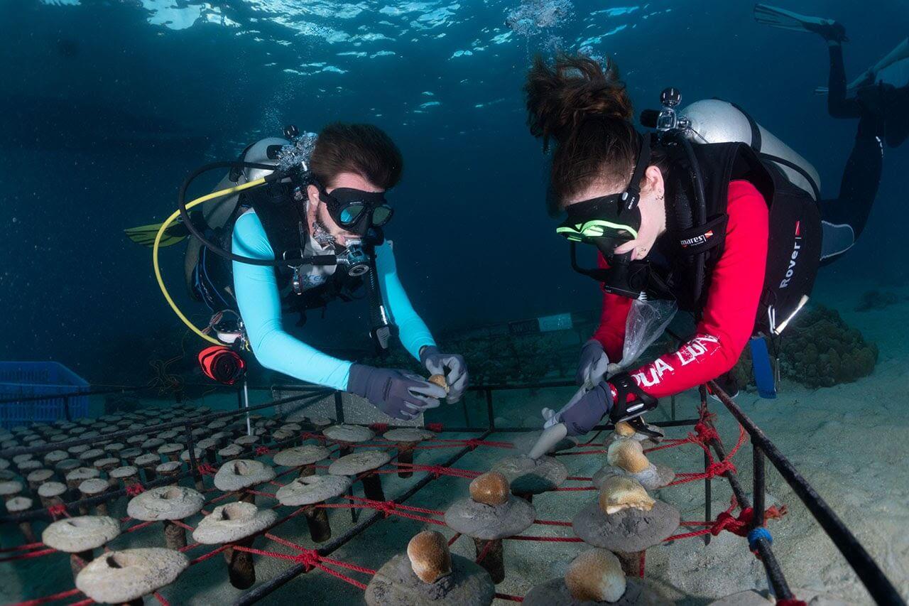 choosing-marine-conservation-internship-2