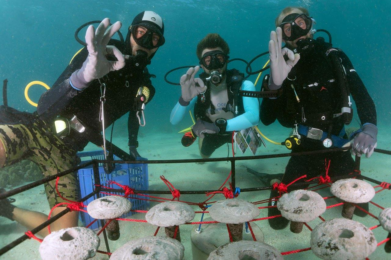sustainable-coral-farming-2